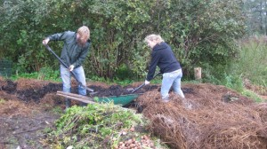 Kompostlimpa under uppbyggnad, på kompostlimpan odlar vi kanske vintersquash nästa år.